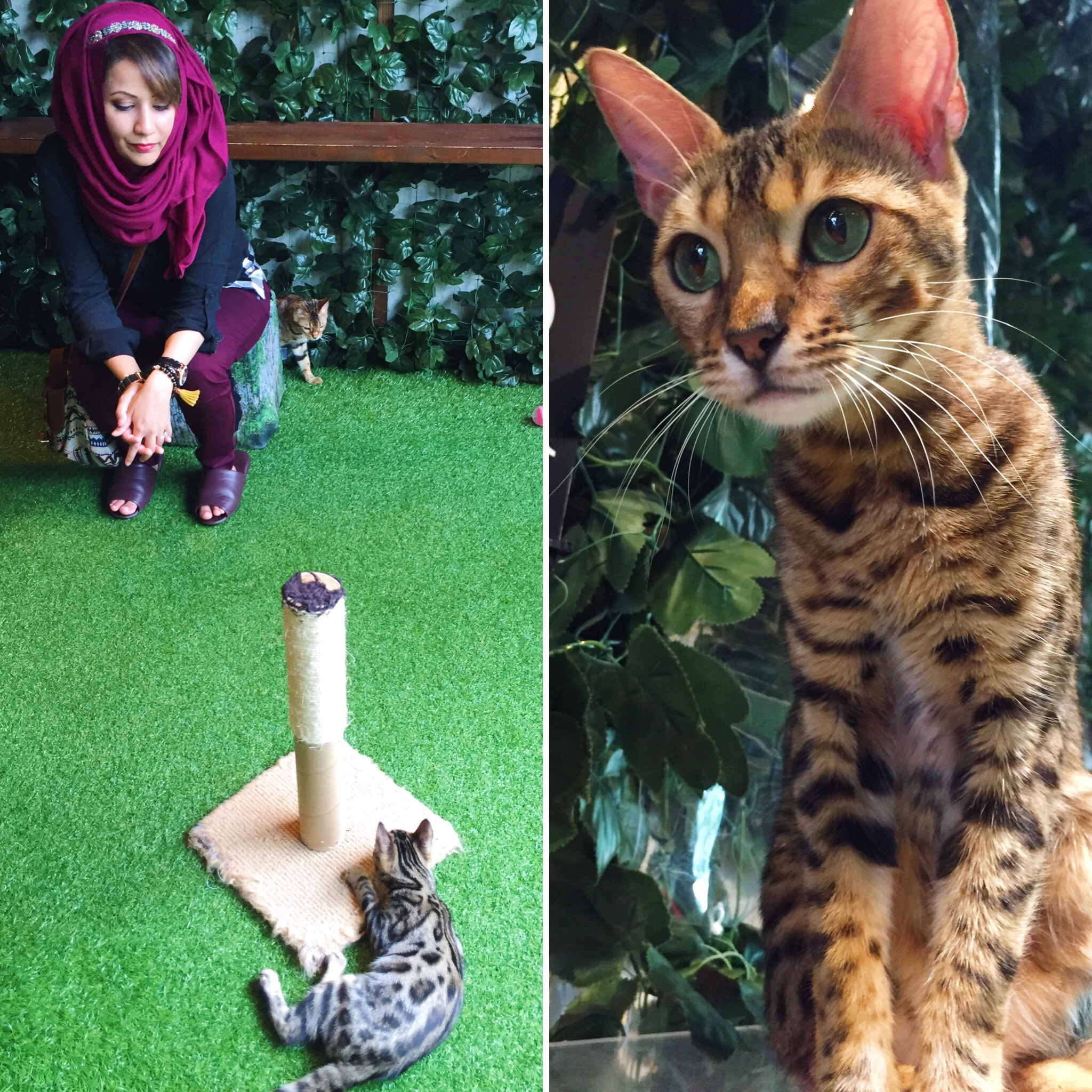 Muslim-travel-Tokyo-Cat-Cafe-Travel-with-Annum.jpg